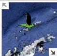Streetview pinguin