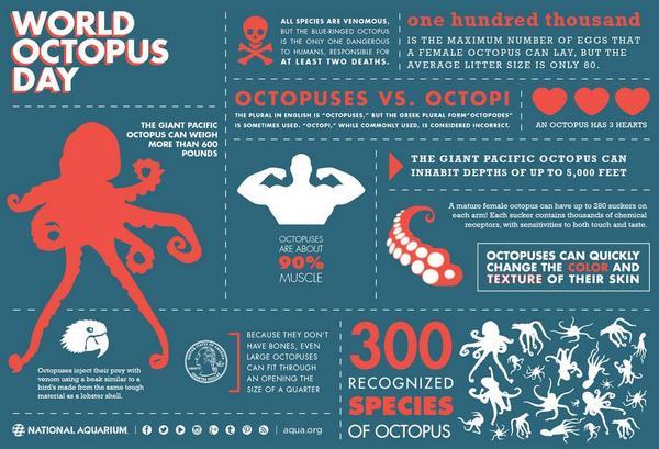 octopus feiten